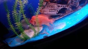 Экзотические рыбки (Краеведческий музей г.Сызрань)