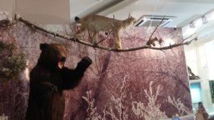 Чучела животных (Краеведческий музей г.Сызрань)